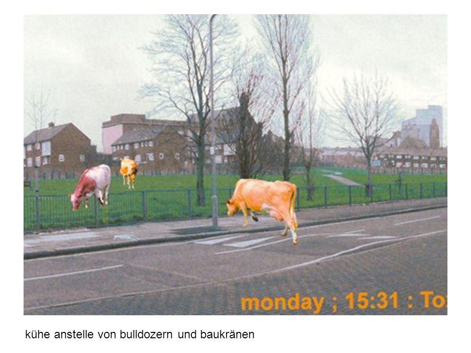 kühe anstelle von bulldozern und baukränen