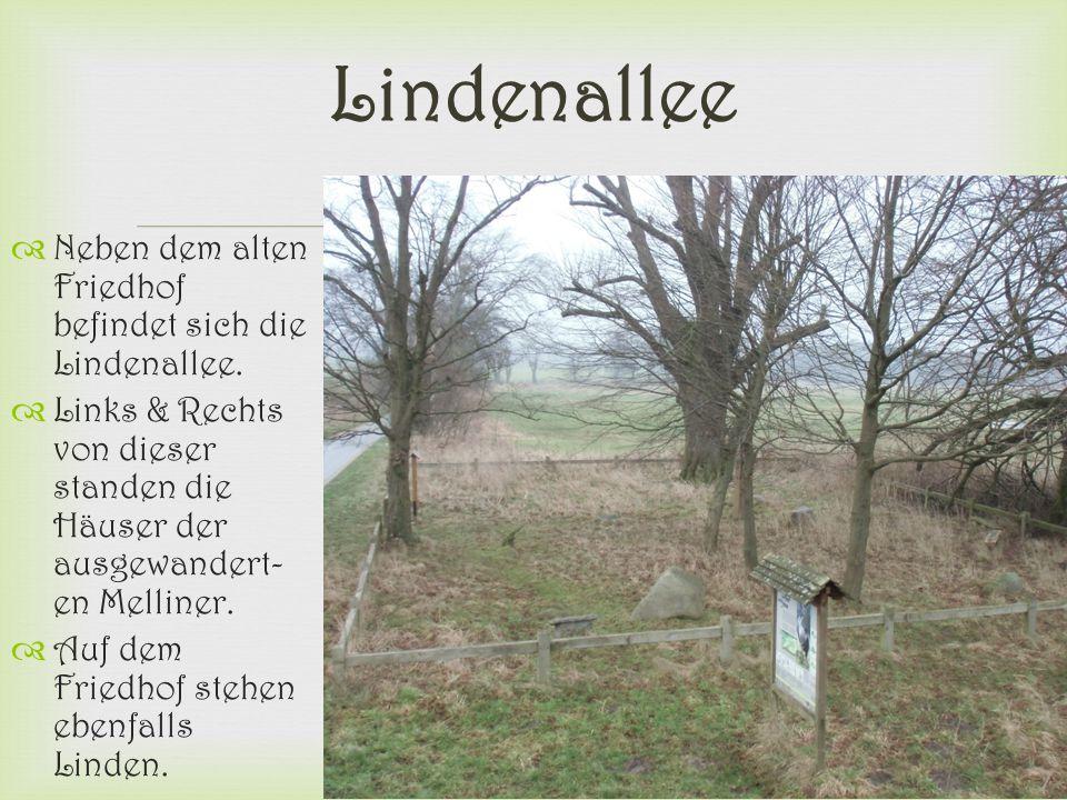  Lindenallee  Neben dem alten Friedhof befindet sich die Lindenallee.  Links & Rechts von dieser standen die Häuser der ausgewandert- en Melliner.