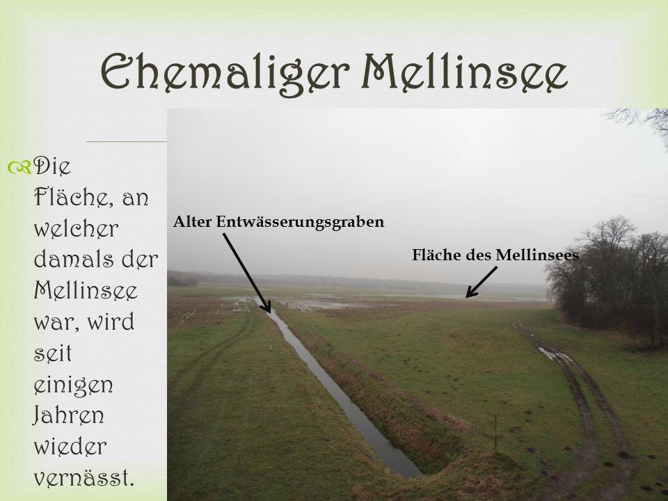  Ehemaliger Mellinsee  Die Fläche, an welcher damals der Mellinsee war, wird seit einigen Jahren wieder vernässt. Alter Entwässerungsgraben Fläche d