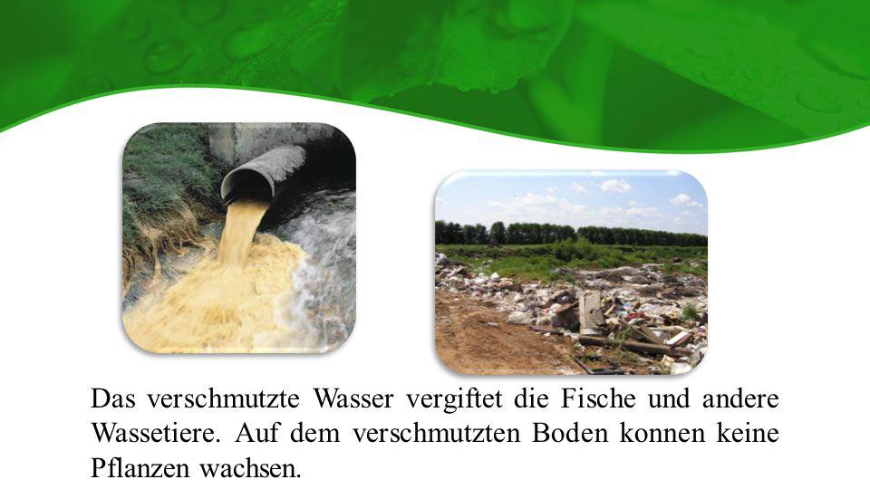 Das verschmutzte Wasser vergiftet die Fische und andere Wassetiere.