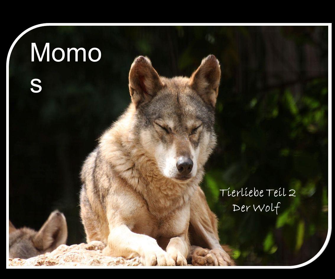 Momo s Tierliebe Teil 2 Der Wolf