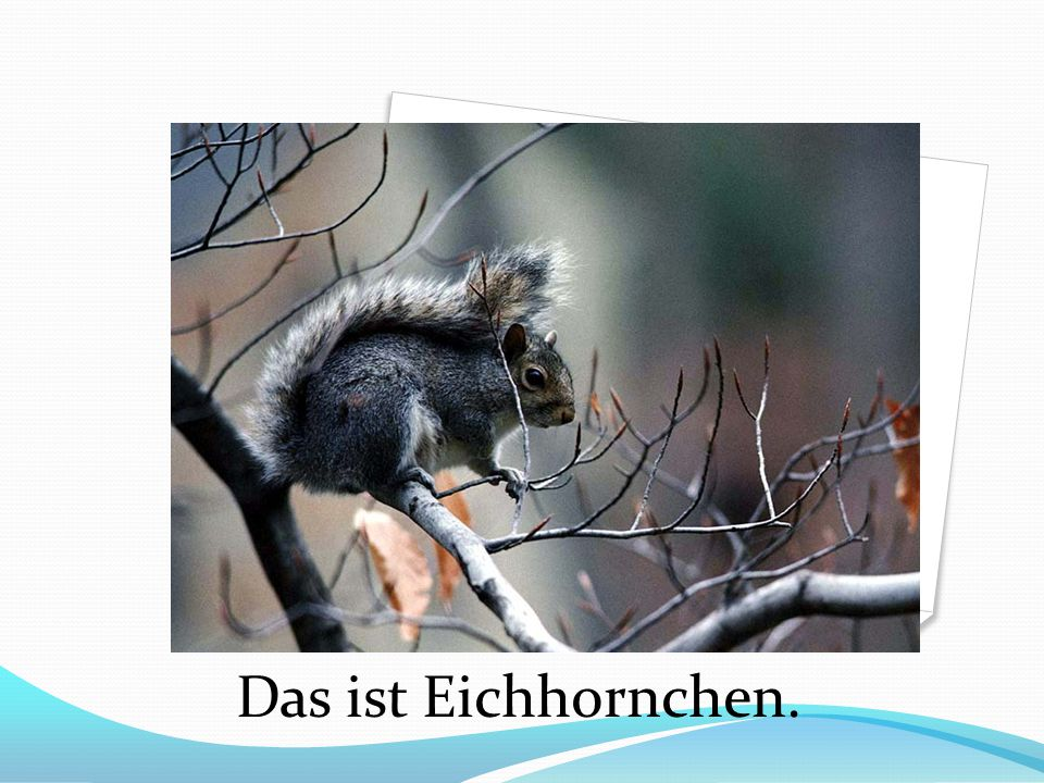 Das ist Eichhornchen.