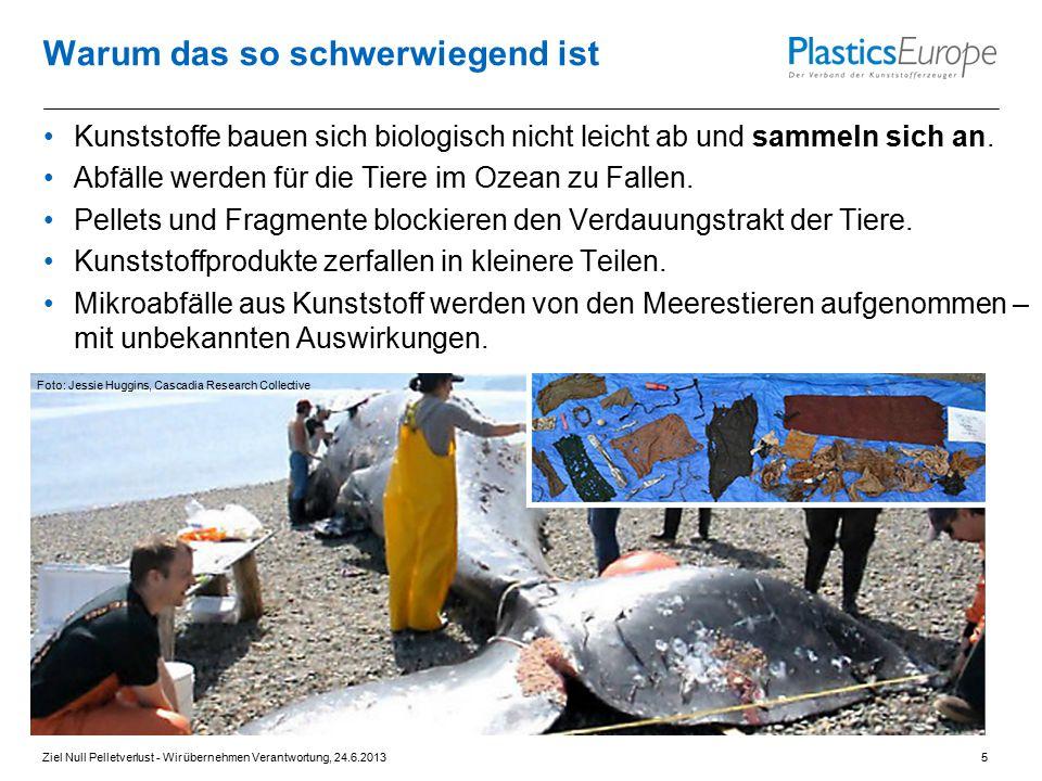 Warum das so schwerwiegend ist Kunststoffe bauen sich biologisch nicht leicht ab und sammeln sich an. Abfälle werden für die Tiere im Ozean zu Fallen.