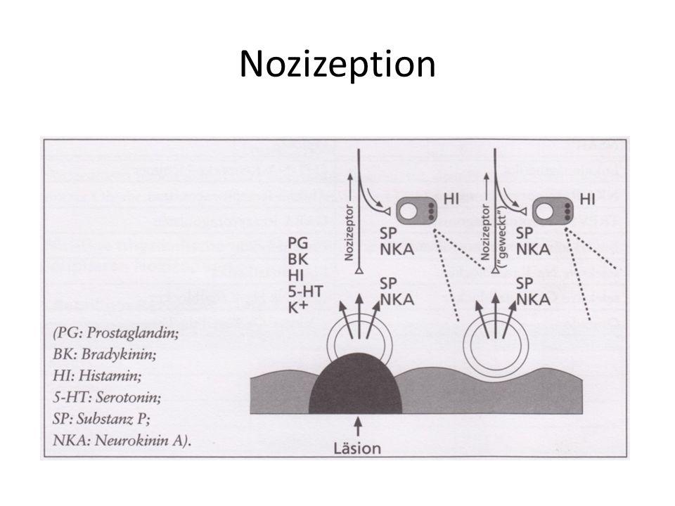 Nozizeption