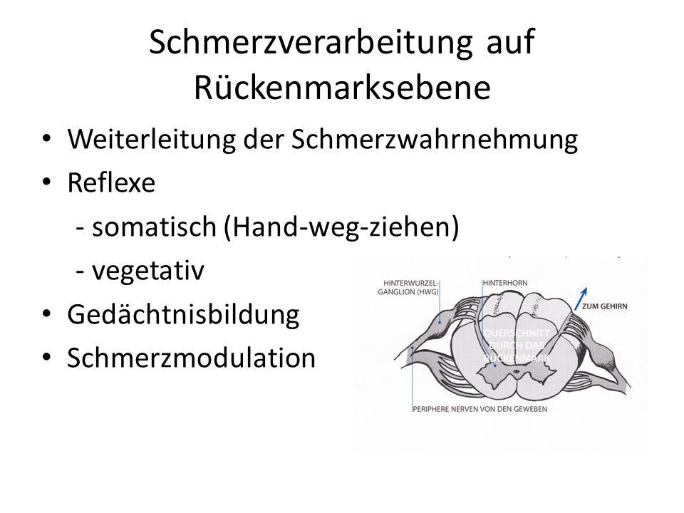 Schmerzverarbeitung auf Rückenmarksebene Weiterleitung der Schmerzwahrnehmung Reflexe - somatisch (Hand-weg-ziehen) - vegetativ Gedächtnisbildung Schm