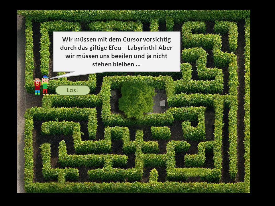 Wir müssen mit dem Cursor vorsichtig durch das giftige Efeu – Labyrinth.
