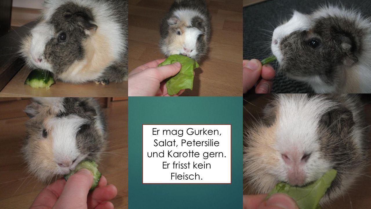 Er mag Gurken, Salat, Petersilie und Karotte gern. Er frisst kein Fleisch.