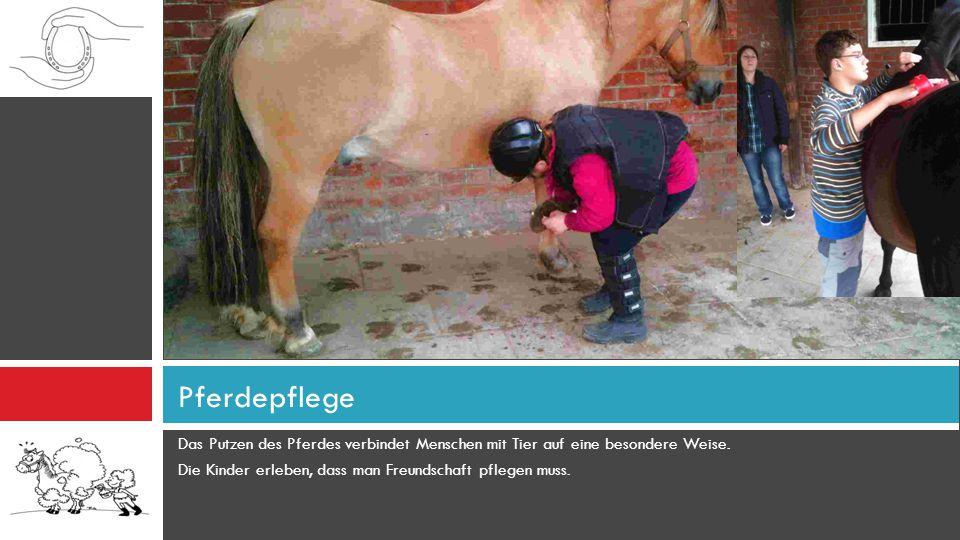 Das Putzen des Pferdes verbindet Menschen mit Tier auf eine besondere Weise. Die Kinder erleben, dass man Freundschaft pflegen muss. Pferdepflege