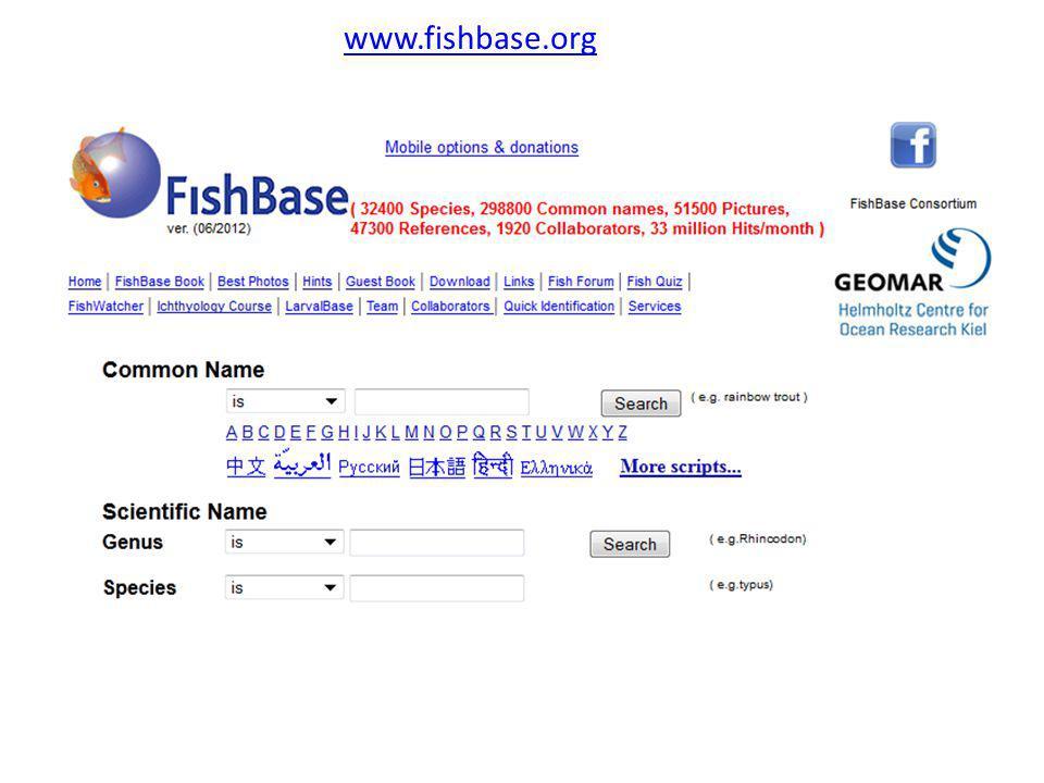 www.fishbase.org
