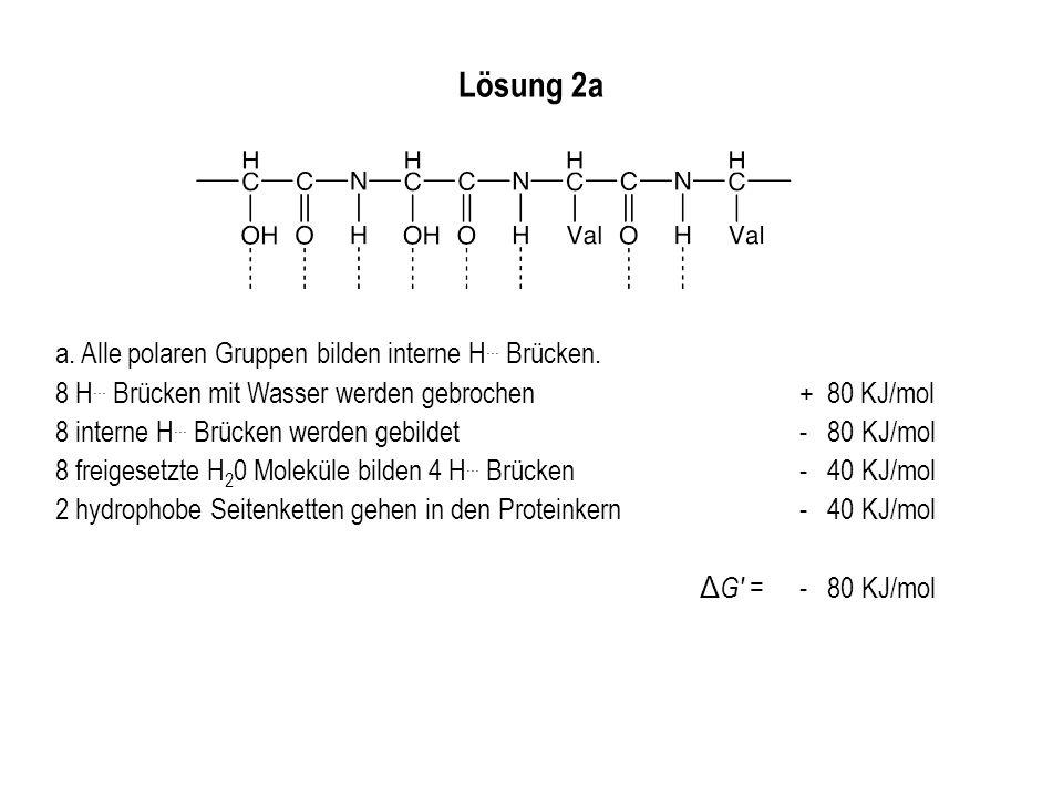 Lösung 2a a. Alle polaren Gruppen bilden interne H... Brücken. 8 H... Brücken mit Wasser werden gebrochen+ 80 KJ/mol 8 interne H... Brücken werden geb