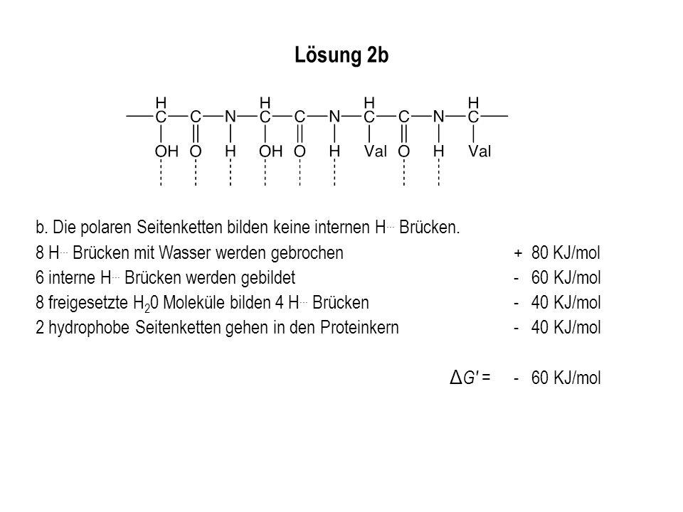 Lösung 2b b. Die polaren Seitenketten bilden keine internen H... Brücken. 8 H... Brücken mit Wasser werden gebrochen+ 80 KJ/mol 6 interne H... Brücken