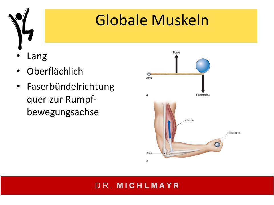 D R. M I C H L M A Y R Globale Muskeln Lang Oberflächlich Faserbündelrichtung quer zur Rumpf- bewegungsachse