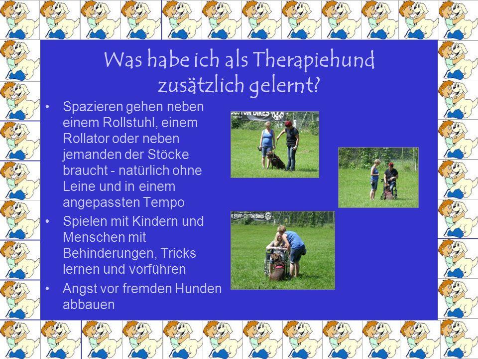 Was habe ich als Therapiehund zusätzlich gelernt? Spazieren gehen neben einem Rollstuhl, einem Rollator oder neben jemanden der Stöcke braucht - natür