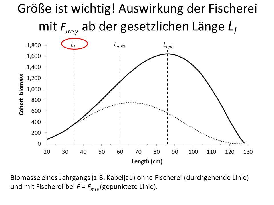 Größe ist wichtig! Auswirkung der Fischerei mit F msy ab der gesetzlichen Länge L l Biomasse eines Jahrgangs (z.B. Kabeljau) ohne Fischerei (durchgehe