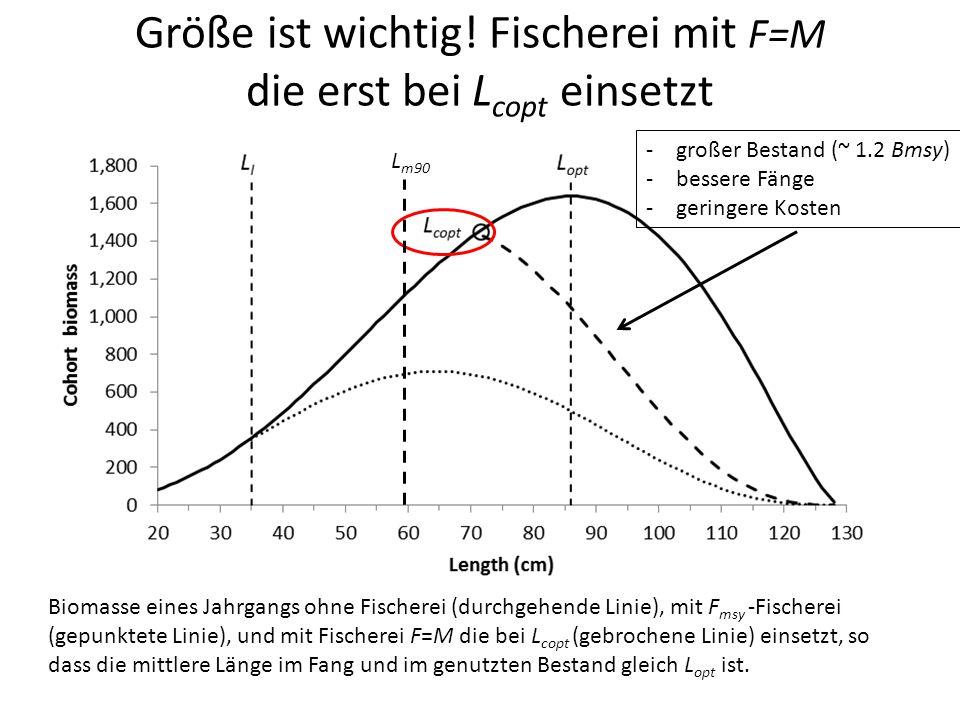 Größe ist wichtig! Fischerei mit F=M die erst bei L copt einsetzt Biomasse eines Jahrgangs ohne Fischerei (durchgehende Linie), mit F msy -Fischerei (