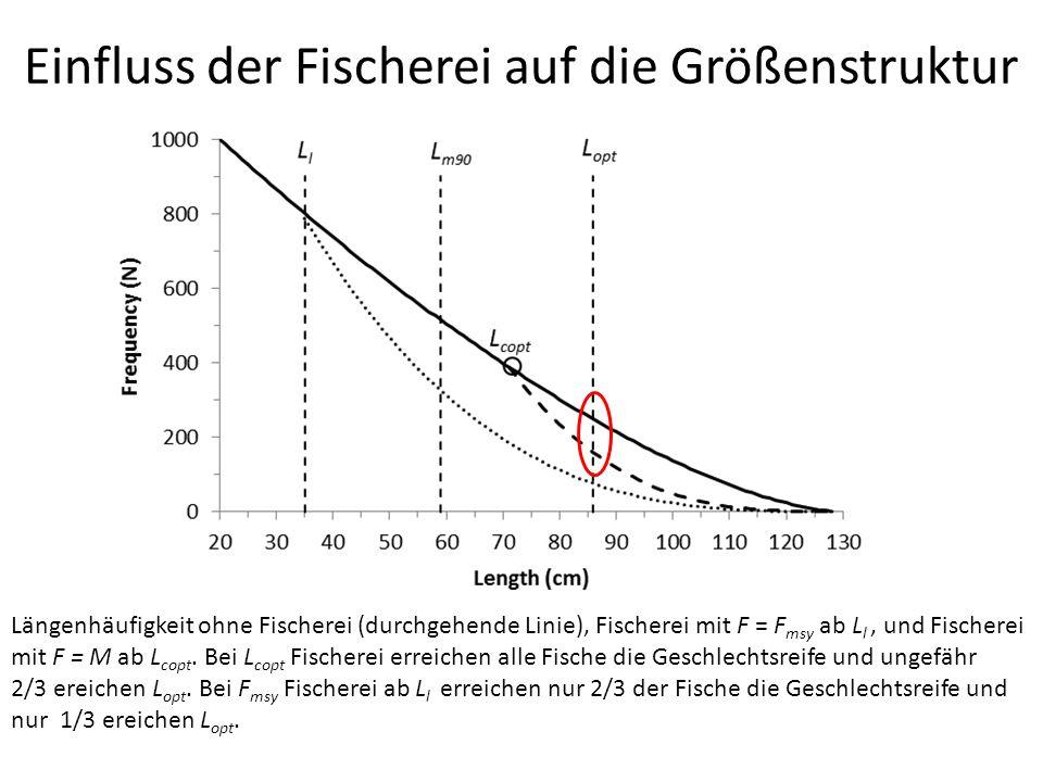 Einfluss der Fischerei auf die Größenstruktur Längenhäufigkeit ohne Fischerei (durchgehende Linie), Fischerei mit F = F msy ab L l, und Fischerei mit