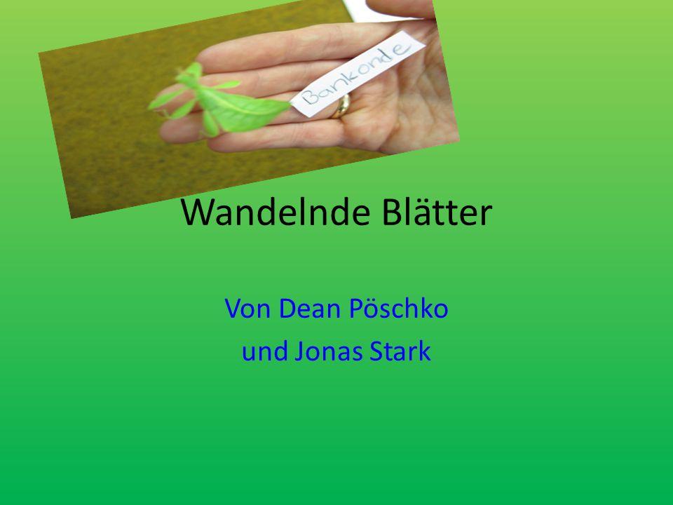 Wandelnde Blätter Von Dean Pöschko und Jonas Stark