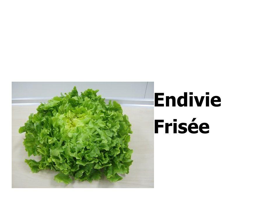 Endivie Frisée