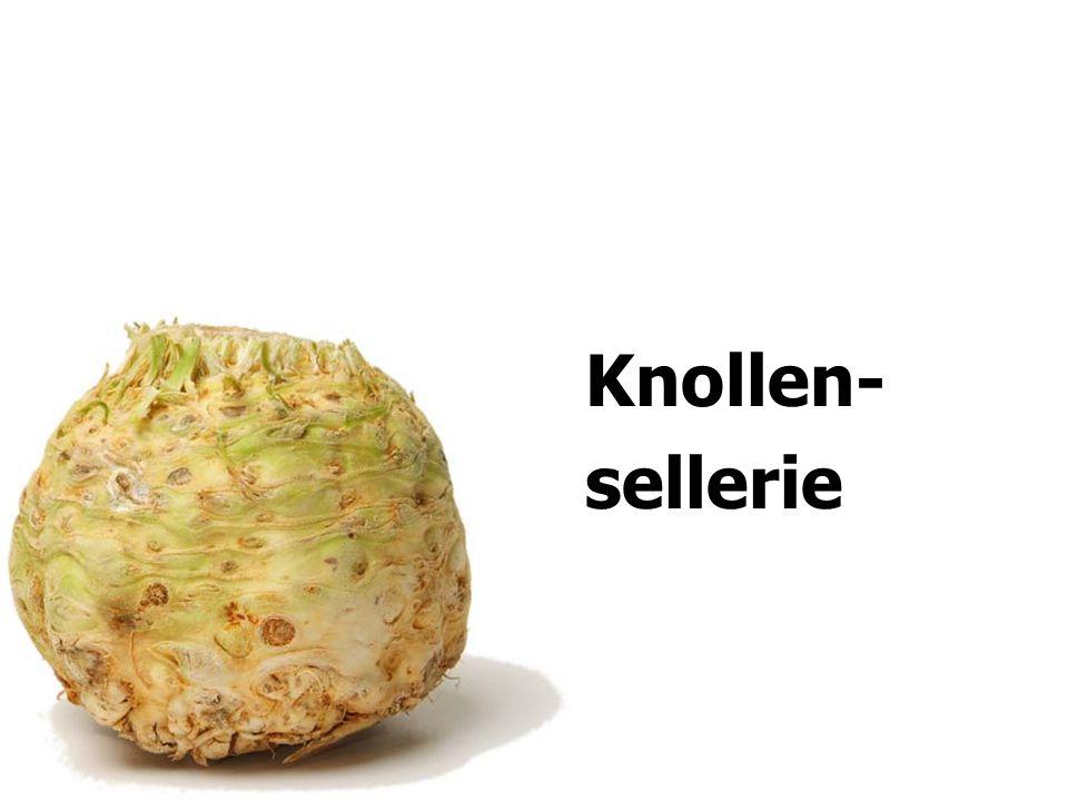 Knollen- sellerie