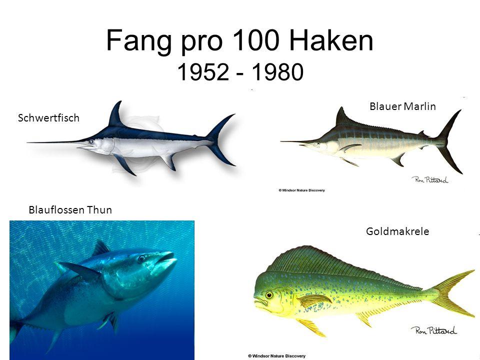 Fang pro 100 Haken 1952 - 1980 Blauer Marlin Schwertfisch Blauflossen Thun Goldmakrele