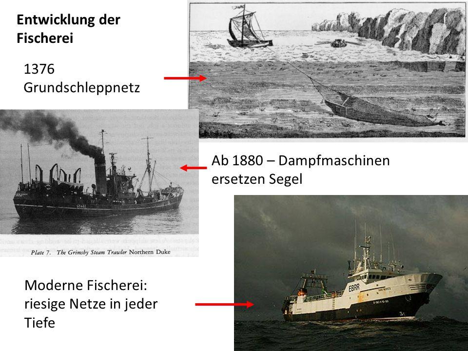 Entwicklung der Fischerei 1376 Grundschleppnetz Ab 1880 – Dampfmaschinen ersetzen Segel Moderne Fischerei: riesige Netze in jeder Tiefe