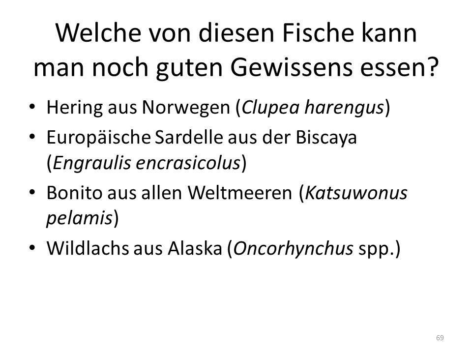 Welche von diesen Fische kann man noch guten Gewissens essen? Hering aus Norwegen (Clupea harengus) Europäische Sardelle aus der Biscaya (Engraulis en