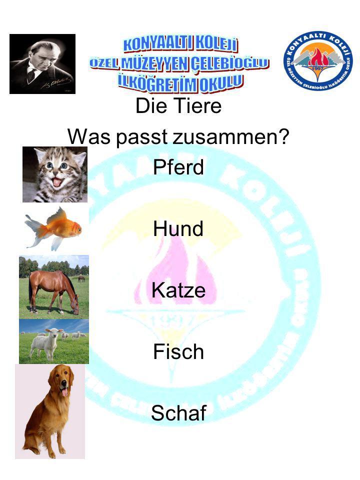 Die Tiere Was passt zusammen? Pferd Hund Katze Fisch Schaf