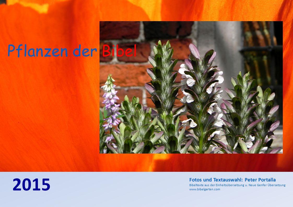 2015 Fotos und Textauswahl: Peter Portalla Bibeltexte aus der Einheitsübersetzung u. Neue Genfer Übersetzung www.bibelgarten.com Pflanzen der Bibel