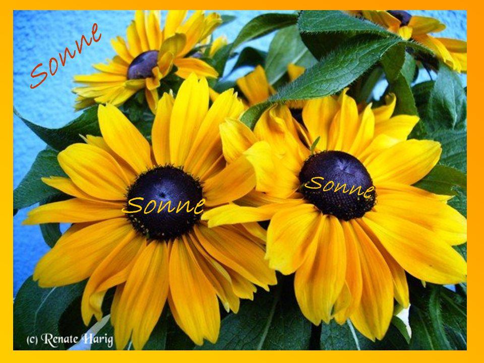 Ein Tag voller SONNE ist reinste Medizin für die Seele, ist für jeden erreichbar und kostet rein gar nichts!