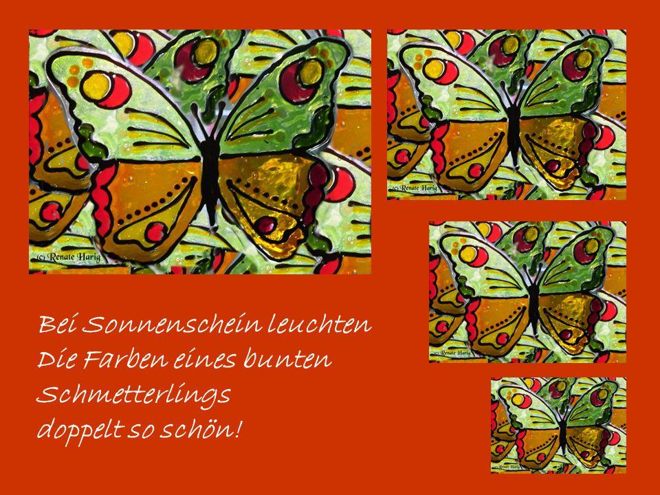 Bei Sonnenschein leuchten Die Farben eines bunten Schmetterlings doppelt so schön!