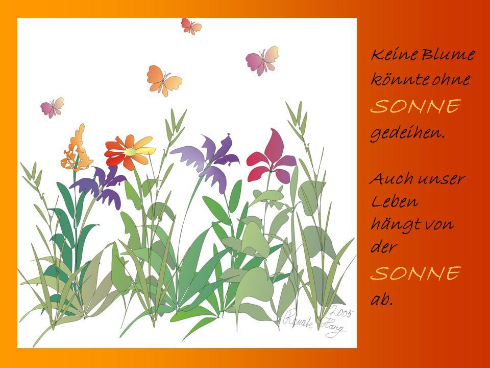 Keine Blume könnte ohne SONNE gedeihen. Auch unser Leben hängt von der SONNE ab.