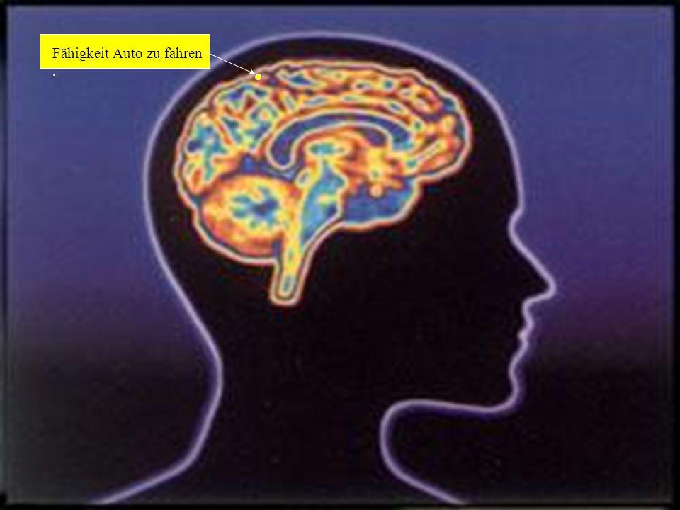 Das weibliche Gehirn Dies ist das Ergebnis jahrelanger Unersuchungen und Forschungen um das Geheimnis des weiblichen Gehirns zu lüften und die einzeln