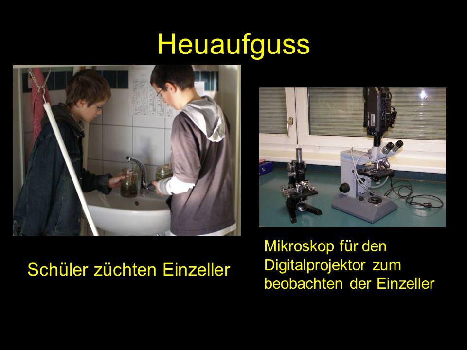Heuaufguss Schüler züchten Einzeller Mikroskop für den Digitalprojektor zum beobachten der Einzeller