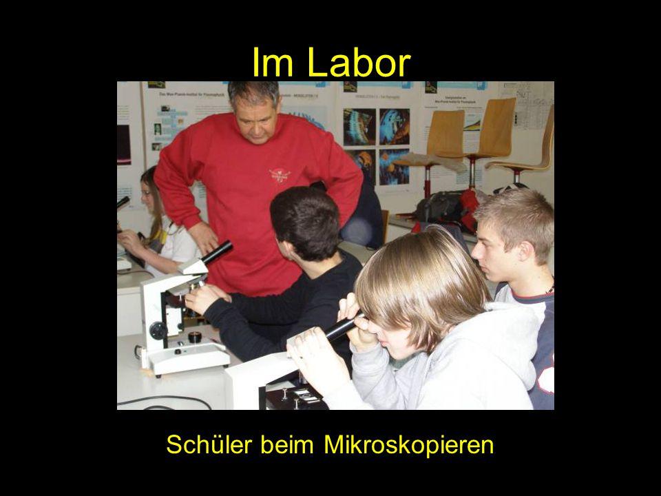 Im Labor Schüler beim Mikroskopieren