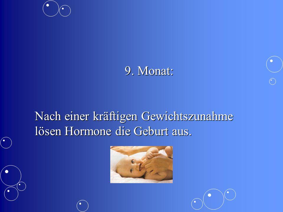 9.Monat: Nach einer kräftigen Gewichtszunahme lösen Hormone die Geburt aus.