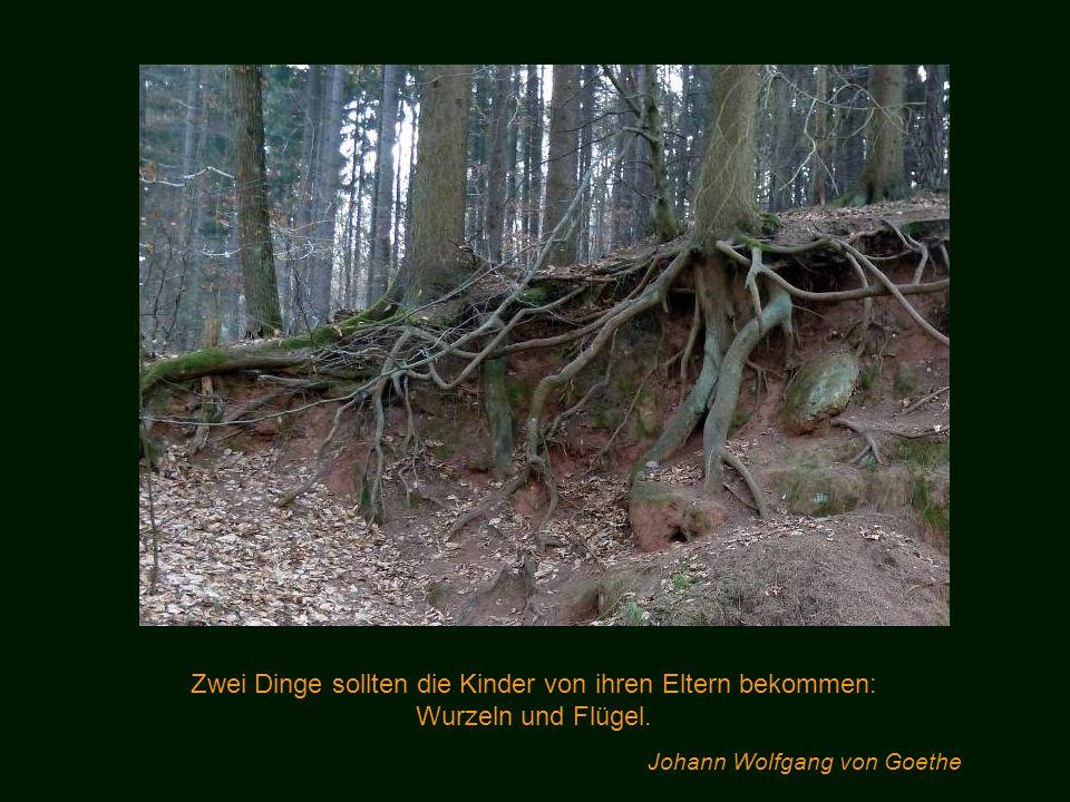 Aus dem Wald kommt kühl und klar das Wasser ! Erich Hornsmann
