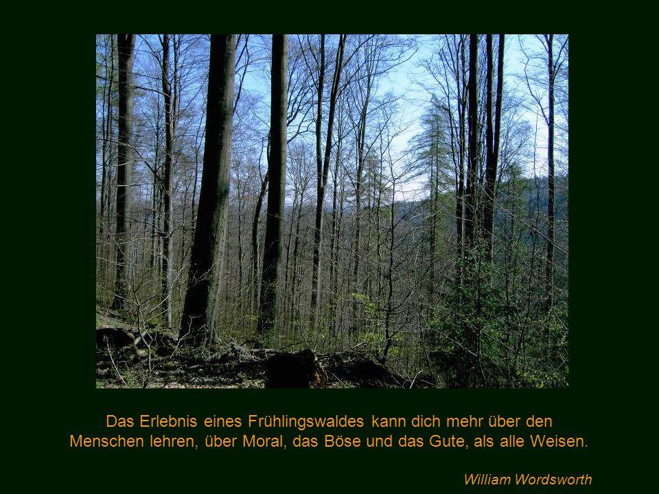 Ein in der Sonne stehender Baum, ein verwitterter Stein, ein Tier, ein Berg – sie haben ein Leben, sie haben eine Geschichte, sie leben, leiden, trotz