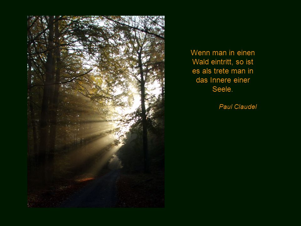 Das Erlebnis eines Frühlingswaldes kann dich mehr über den Menschen lehren, über Moral, das Böse und das Gute, als alle Weisen. William Wordsworth