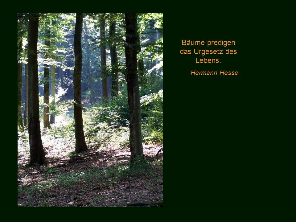 Nur der Einsame findet den Wald! Wo ihn mehrere suchen, da flieht er und nur seine Bäume bleiben zurück. Peter Rosegger