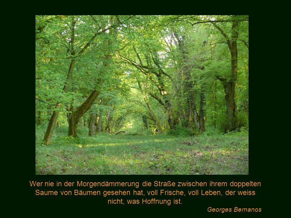 Bäume predigen das Urgesetz des Lebens. Hermann Hesse