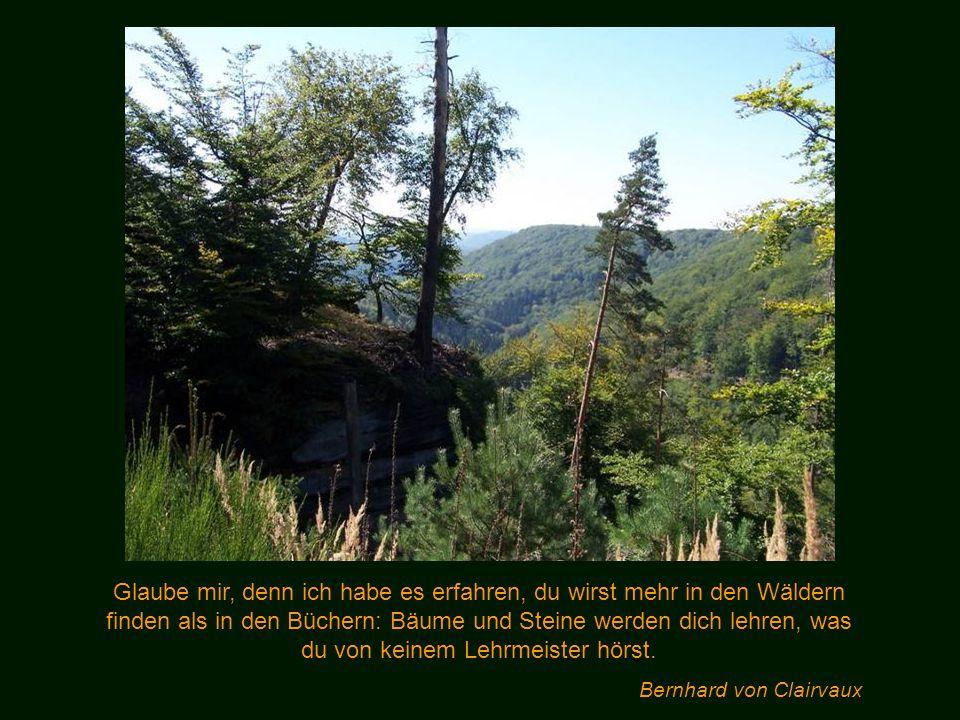 Glaube mir, denn ich habe es erfahren, du wirst mehr in den Wäldern finden als in den Büchern: Bäume und Steine werden dich lehren, was du von keinem Lehrmeister hörst.
