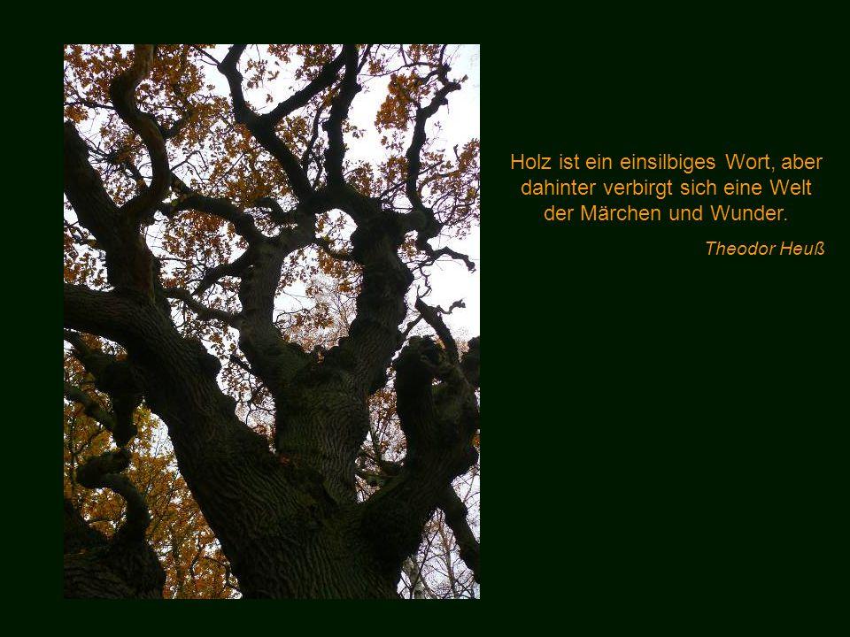 Glaube mir, denn ich habe es erfahren, du wirst mehr in den Wäldern finden als in den Büchern: Bäume und Steine werden dich lehren, was du von keinem