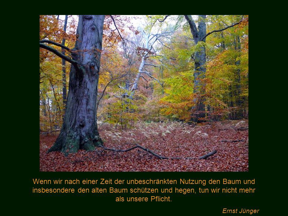 Holz ist ein einsilbiges Wort, aber dahinter verbirgt sich eine Welt der Märchen und Wunder. Theodor Heuß