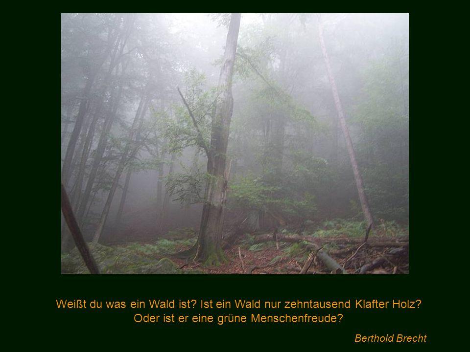 Weißt du was ein Wald ist.Ist ein Wald nur zehntausend Klafter Holz.