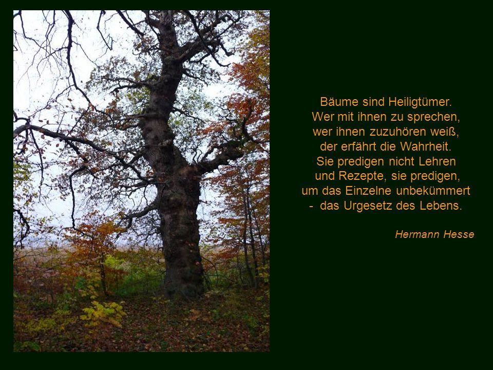 Weißt du was ein Wald ist? Ist ein Wald nur zehntausend Klafter Holz? Oder ist er eine grüne Menschenfreude? Berthold Brecht