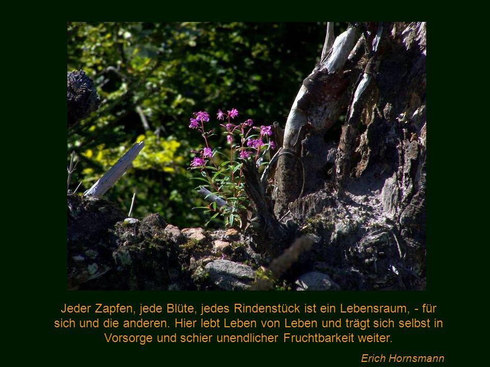 In den Wäldern sind Dinge, über die nachzudenken, man jahrelang im Moos liegen könnte. Franz Kafka
