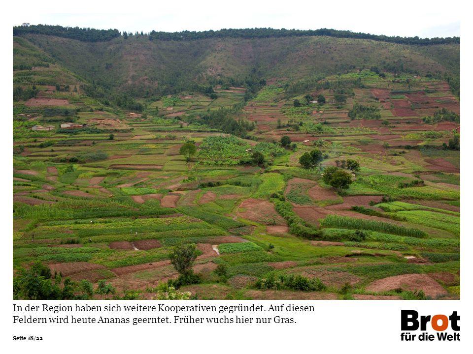 Seite 18/22 In der Region haben sich weitere Kooperativen gegründet. Auf diesen Feldern wird heute Ananas geerntet. Früher wuchs hier nur Gras.