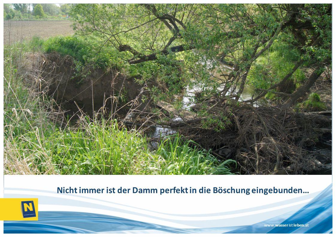www.wasser ist leben.at Nicht immer ist der Damm perfekt in die Böschung eingebunden…
