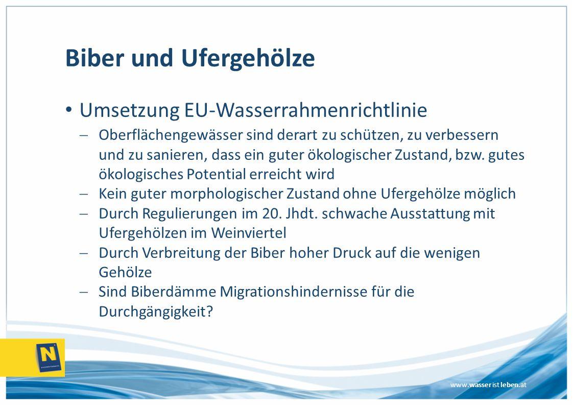 www.wasser ist leben.at Biber und Ufergehölze Umsetzung EU-Wasserrahmenrichtlinie  Oberflächengewässer sind derart zu schützen, zu verbessern und zu sanieren, dass ein guter ökologischer Zustand, bzw.