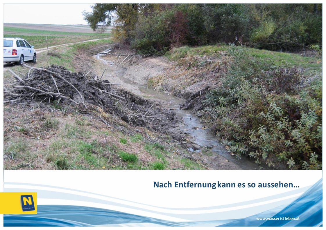 www.wasser ist leben.at Nach Entfernung kann es so aussehen…